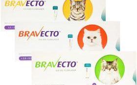 Fästingmedel för hund och katt