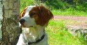 Hunden Konrad